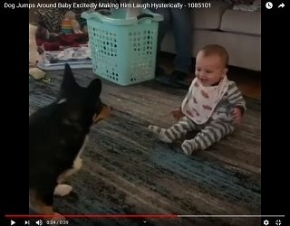 Viral Video: Dog Jumps Around Baby Excitedly Making Him Laugh Hysterically