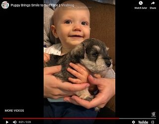 Viral Video: Puppy Brings Smile to Sad Face