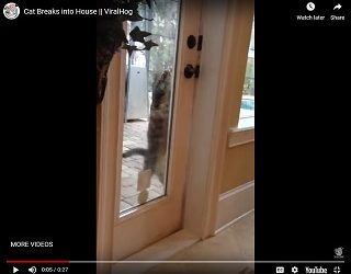 Viral Video: Cat Breaks into House