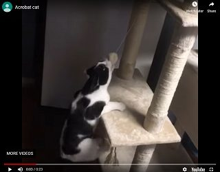 Viral Video: Cat Refuses To Release Toy