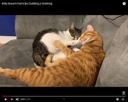 Trending: Kitty Doesn't Feel Like Cuddling