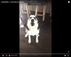 Trending: Blue The Dog Argues His Case