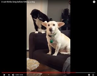 Trending: Cat Thinks LONG And Hard About Smacking Dog