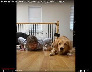 Trending: Pup Imitates Human & Does Push-ups