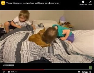 Trending: Cat Being Very Tolerant Of Kisses From Baby Humans